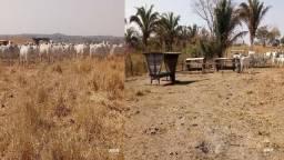 Fazenda para Pecuária em Acorizal MT com 1.456 hectares