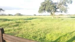 Fazenda 373 Hectares Grande Oportunidade Perto da Capital - MT