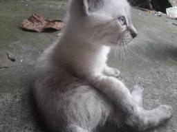 Doando filhotinhos de gato (sem nome; branco, preto e marrom)