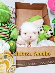 Filhotes de Shihtzu