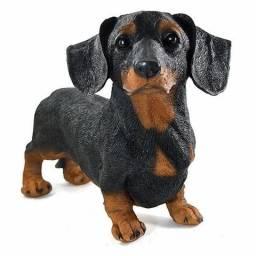 Compro cachorro basset