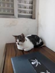 Doa se uma gatinha linda castrada e vermifugada