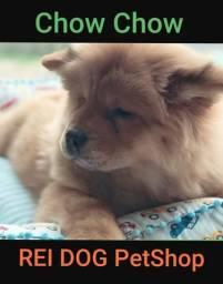 Chow Chow - REI DOG Filhotes