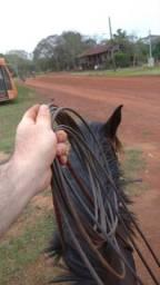 Cavalo crioulo manso pra crianças