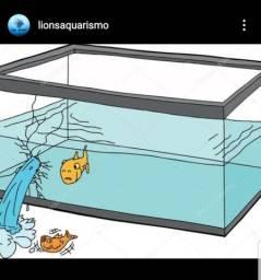 Reforma em aquario em geral .