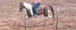 Pent horse