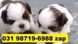 Canil Filhotes Cães Top BH Shihtzu Yorkshire Basset Lhasa Maltês Poodle Pug