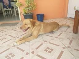 Doação de Cachorro Lindo