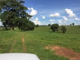 Fazenda Pecuária - PR