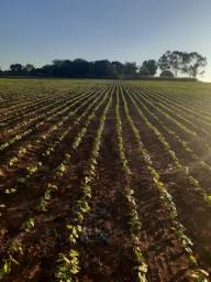 Fazenda 13.5 Alqueires | 70 km Goiânia | lavoura | Passa Rio | oportunidade