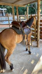Cavalo - marcha picada