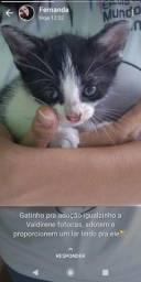 Gato bebê, para doação