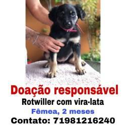 DOAÇÃO RESPONSÁVEL/ Rotwiller com vira-lata