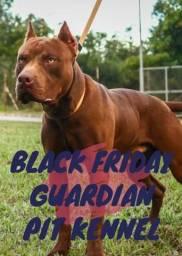Filhotes de Pitbull (Black Friday)
