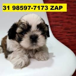 Canil Os Melhores Filhotes Cães BH Shihtzu Poodle Basset Lhasa Yorkshire Beagle Maltês