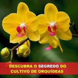 Guia para cultivo de Orquídeas no Brasil