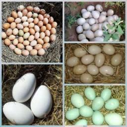 Ovos de várias aves
