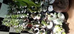 Plantas e artesanatos R$ 12,00