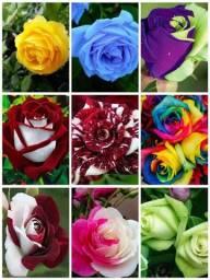 50 Sementes De Rosas Raras