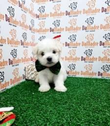 Maltês é no Da Madre Pet Shop