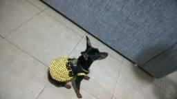 Pinscher Pinscher Vestido para cachorrinha