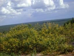 Ocasião, 500 Hectares, terra mista, pecuária, eucalipto, Tangará-MT