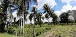 Fazenda com 41 tarefas na região de Cachoeira