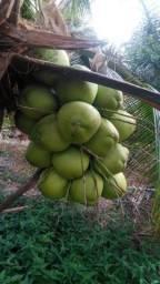Coco Verde Paraipaba
