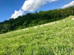 Título do anúncio: Fazenda para Gado a venda no Mato Grosso em Rondonopolis