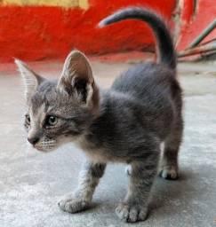 Doa se filhotes de Gato