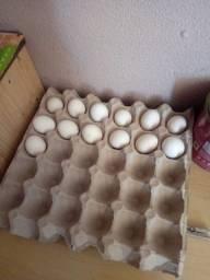 Ovos galados de Sebreight