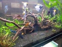 Luminária para aquário!!!