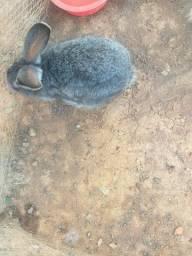 Vendo coelhos