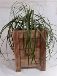 cachepôs em madeira  para plantas maiores