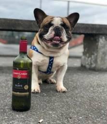 BULL DOG FRANCES MARAVILHOSOS