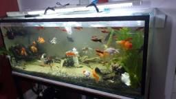 Aquario completo com 540 litros