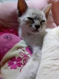 Doa_se um filhote de gatinho