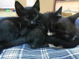 Doação filhotinhos gatinhos Osasco