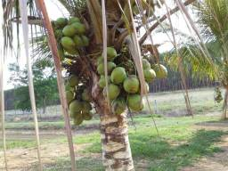 Fazenda 15 alqueires município de Ipameri Goiás