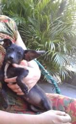 Cão cachorro filhotes doação viralata