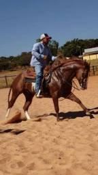 Cavalo Quarto de Milha laço