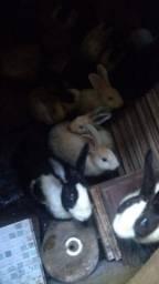 Vendo coelhos.