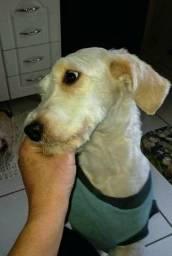 Doação cachorro castrado