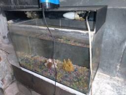 Lindo aquário. Completo com. cascalho,pedras,lâmpadas e bomba. Centro de Niterói.