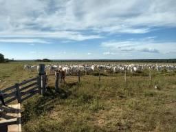 Fazenda no MT