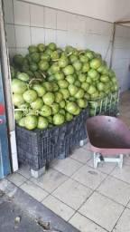 Vendo coco verde , vendo coco seco, vendo coco ralado