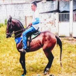 Cavalo - Quarto de milha