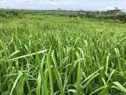 Fazenda 420alqueire região de pimenta bueno