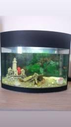 Diversos aquários para peixes