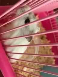 Hamster com Gaiola e tudo